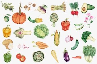 Vecteur de collection de légumes dessinés à la main