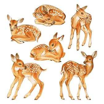 Vecteur dessiné à la main de l'ensemble aquarelle de bébé cerfs illustration de faons isolé sur blanc