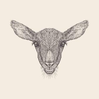 Vecteur dessiné à la main de tête de chèvre illustration.