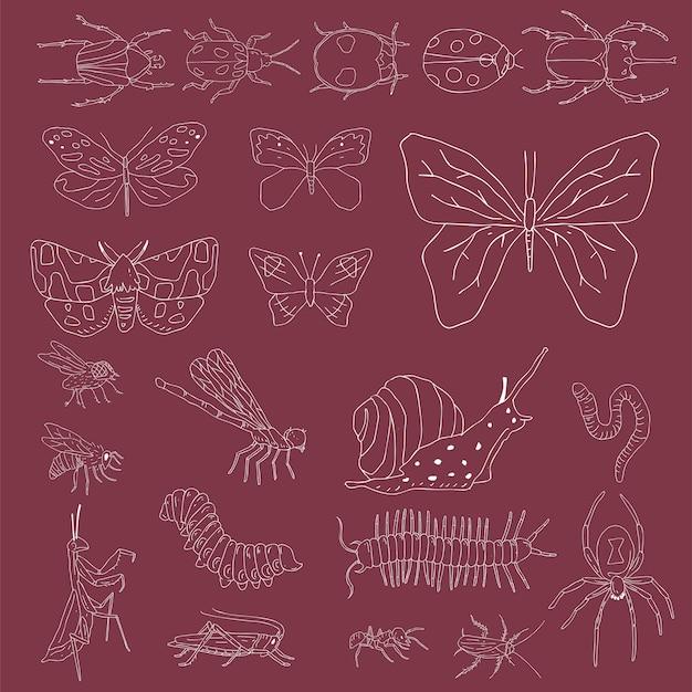 Vecteur de différents types d'insectes
