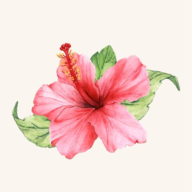 Vecteur de fleur dessiné à la main isolé