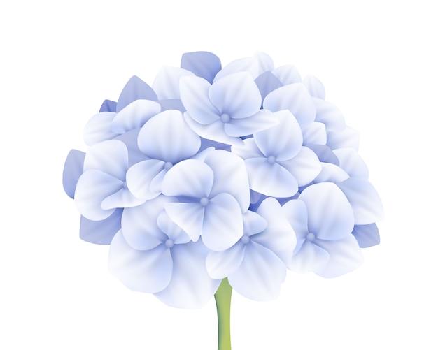 Vecteur de fleur d'hortensia