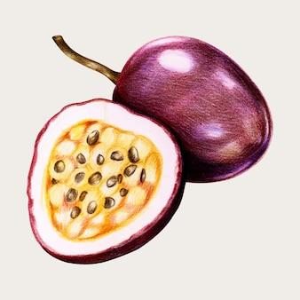 Vecteur de fruits de la passion frais au crayon de couleur
