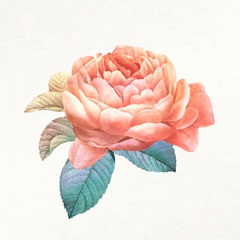 Vecteur d'illustration esthétique fleur, remixé à partir d'images du domaine public vintage
