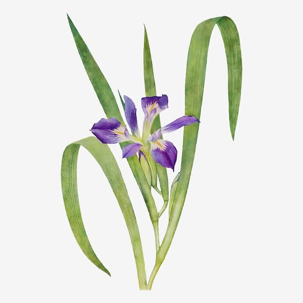 Vecteur d'illustration de fleur d'iris vintage
