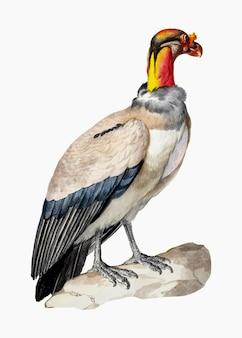 Vecteur d'illustration de vautour royal, remixé à partir d'œuvres d'art d'aert schouman