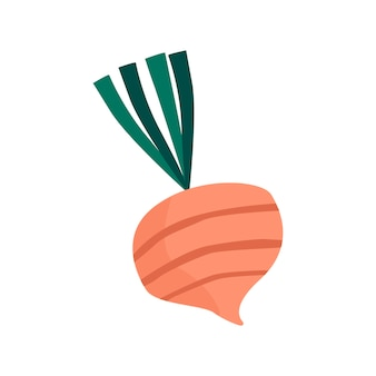 Vecteur d'ingrédients sains de betteraves fraîches