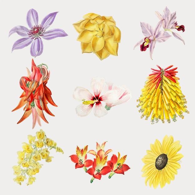 Vecteur de jeu de fleurs colorées dessinés à la main