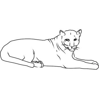 Vecteur de léopard dessiné à la main esquissé à la main