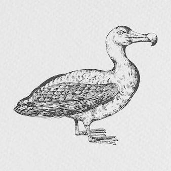 Vecteur d'oiseau albatros dessiné à la main