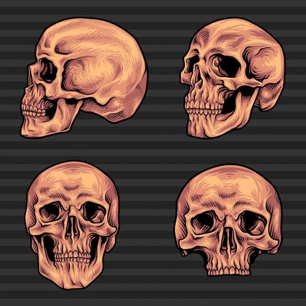 Vecteur de paquet de crâne