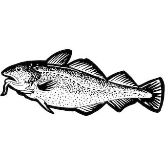 Vecteur de poisson de morue esquissé à la main