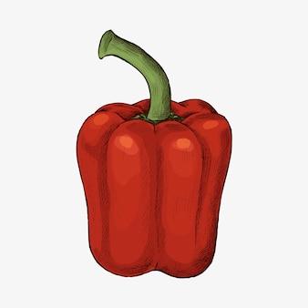 Vecteur de poivron rouge bio frais