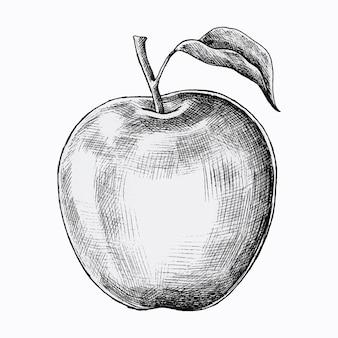 Vecteur de pomme fraîche dessiné à la main