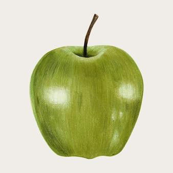 Vecteur de pomme verte dessinée à la main au crayon de couleur