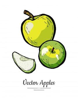 Vecteur de pommes isolé. pommes coupées entières. illustration de fruits verts jaunes dessinés à la main.