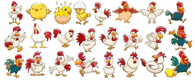 Vecteur de poulet set clipart