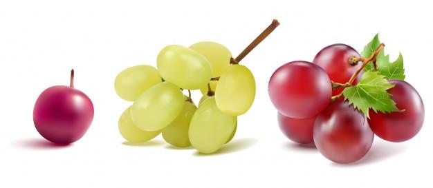 Vecteur de raisins
