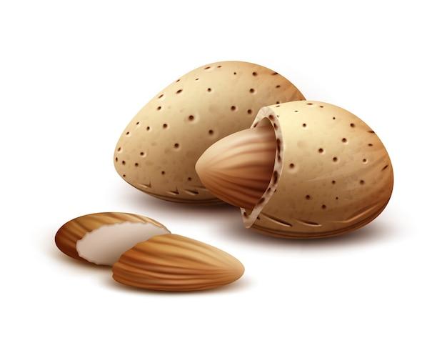 Vecteur réaliste de noix d'amande décortiquées, non décortiquées bouchent la vue latérale isolé sur fond blanc