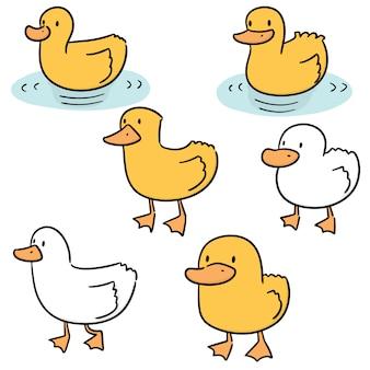 Vecteur série de canard
