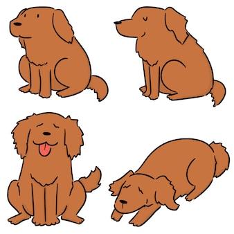 Vecteur série de chien, golden retriever