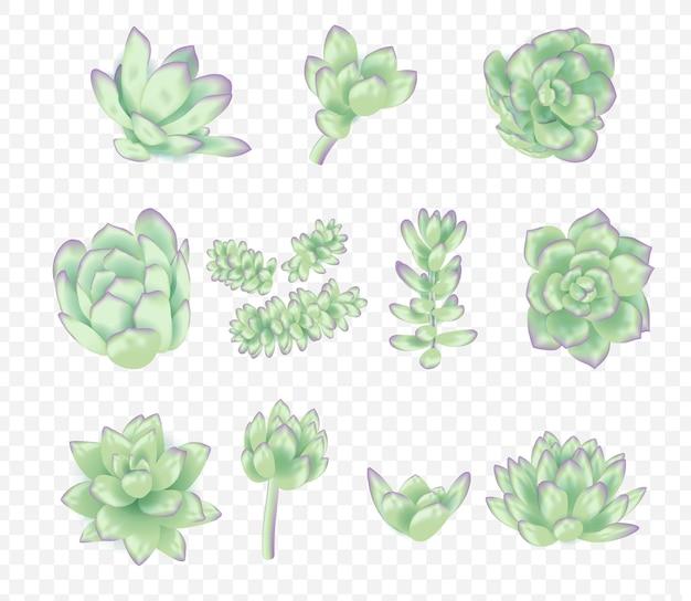 Vecteur succulentes collection