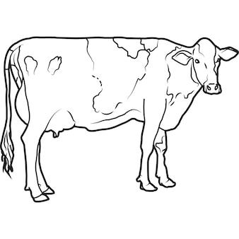Vecteur de vache holstein dessiné à la main à la main