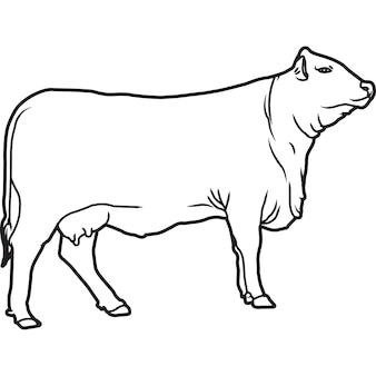 Vecteur de vache santa gertrudis dessiné à la main à la main
