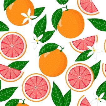 Vector cartoon pattern avec citrus paradisi ou pamplemousse fruits exotiques, fleurs et feuilles sur fond blanc