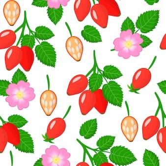 Vector cartoon pattern avec dogrose ou rosa rubiginosa fruits exotiques, fleurs et feuilles sur fond blanc