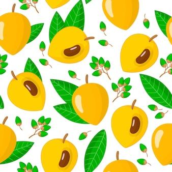 Vector cartoon pattern avec pouteria campechiana ou canistel fruits exotiques fleurs et feuilles sur fond blanc