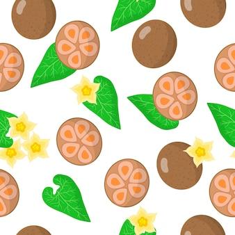 Vector cartoon pattern avec siraitia grosvenorii ou arhat fruits exotiques, fleurs et feuilles sur fond blanc