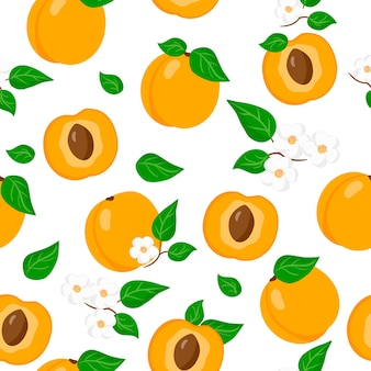 Vector cartoon seamless pattern avec prunus armeniaca ou abricot fruits exotiques, fleurs et feuilles sur fond blanc