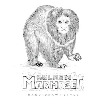 Vector golden marmoset semble réaliste, illustration animale dessinée à la main