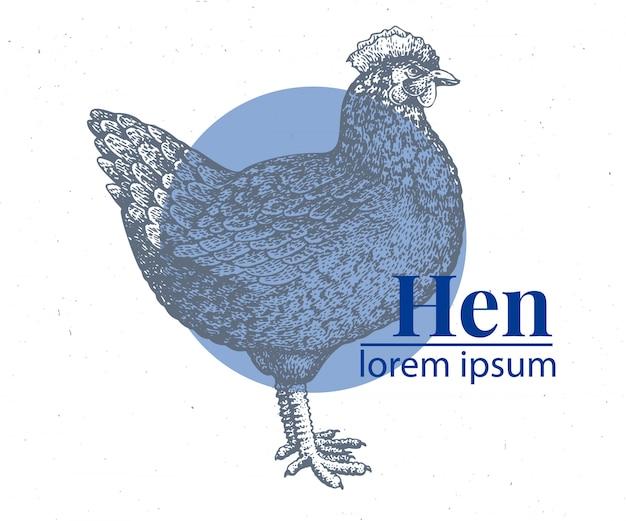 Vector illustration de poulet dessiné à la main.