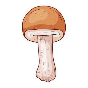 Vector isolé automne doodle illustration de cèpes comestibles de forêt dans le style de contour.