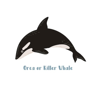 Vector orca ou épaulard. illustration de dessin animé sur fond blanc pour autocollant, conception