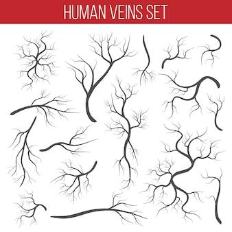 Veines rouges, vaisseau humain, artères de santé.