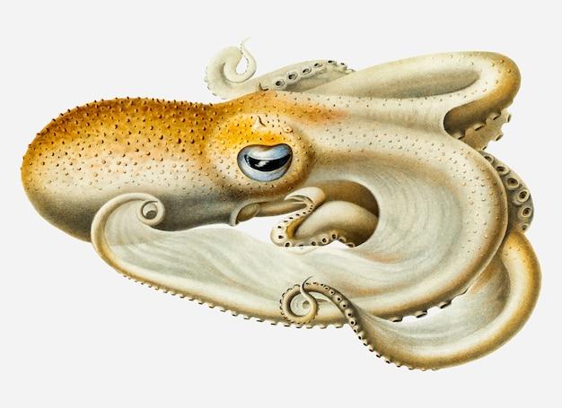 Velodona pieuvre