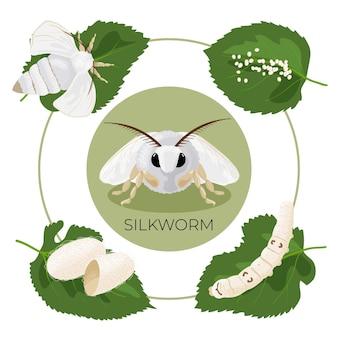 Ver à soie. étapes de développement du cycle de vie. oeuf, chenille, cocon, papillon.