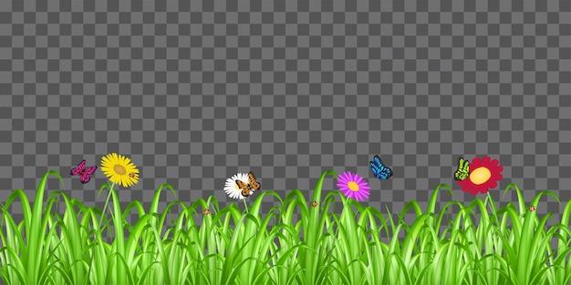 Véritable herbe verte avec coccinelle fleur et papillon