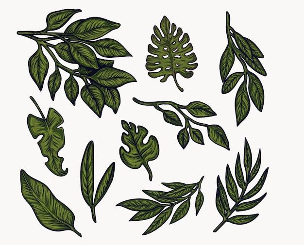 Verts de feuillage, plantes isolées illustration dessinée à la main.