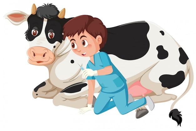 Un vétérinaire faisant l'injection à une vache