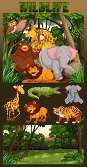 Vie sauvage vivant dans l'illustration de la forêt