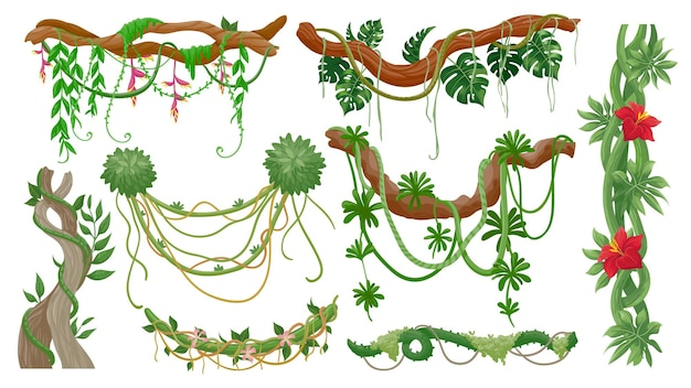 Vignes de la jungle. branches d'arbres tropicaux avec des cordes de lianes suspendues, de la mousse verte, des feuilles de plantes exotiques et des fleurs. flore de la forêt tropicale, ensemble de vecteurs de vigne. branche d'illustration et forêt de jungle d'arbre, feuille verte