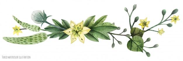 Vignette aquarelle plantes sauvages