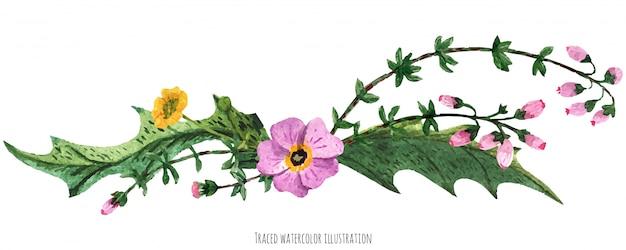 Vignette de plantes sauvages d'ecosse