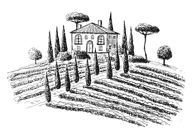 Vignobles paysage de plantation de vigne illustrations dessinées à la main
