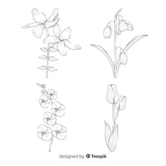 Vintage collection de fleurs botaniques dessiner