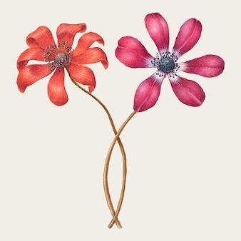 Vintage coquelicot anémone fleur illustration dessin floral